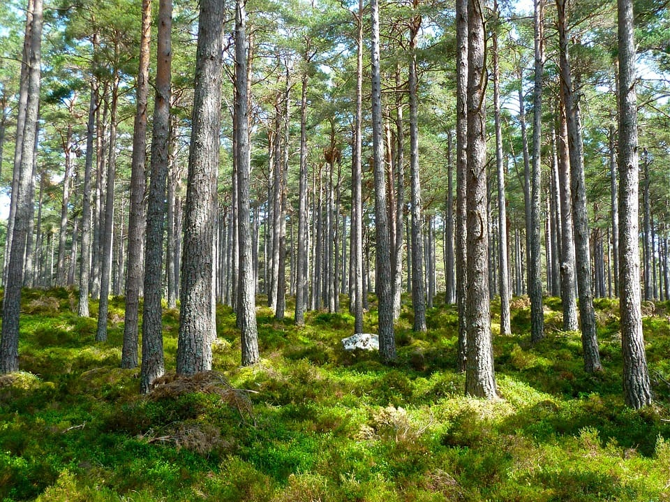 blog-paperless-office-trees.jpg